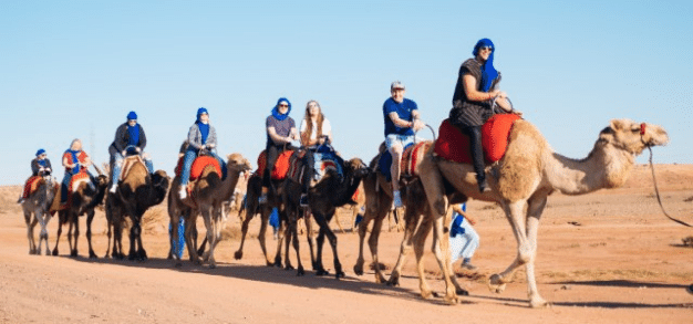 Exclusive team riding camels 2
